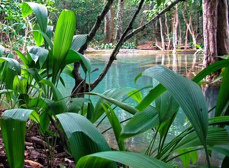 jungle laos 2