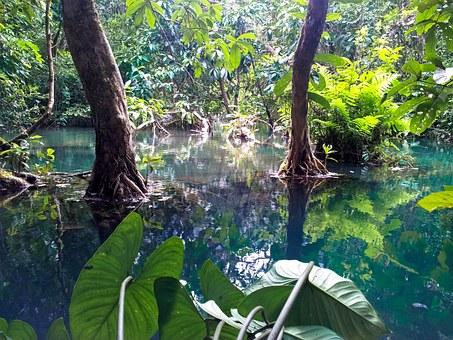jungle laos1